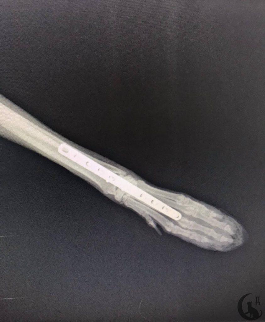 """Собака Снежка. 4 года. Не стерилизованная. Проходила лечение в ветеринарной клинике """"Дженк"""" в Царицыно"""