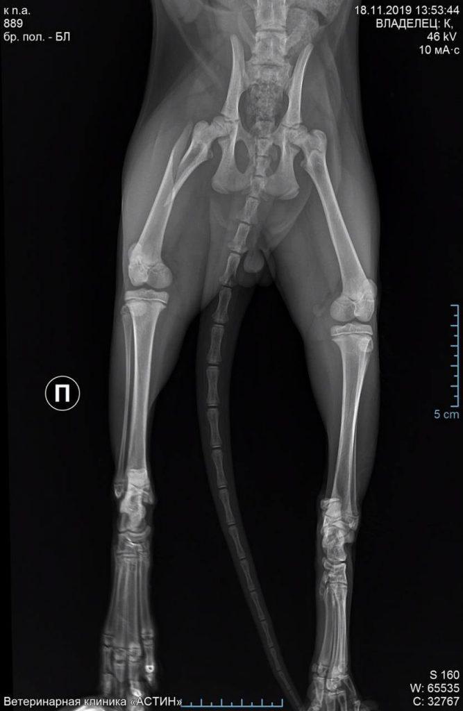 Кошка Фаня. 8 лет, стерилизованная